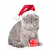 """Мнямс """"С новым годом от """"Мнямс"""", набор для котят"""